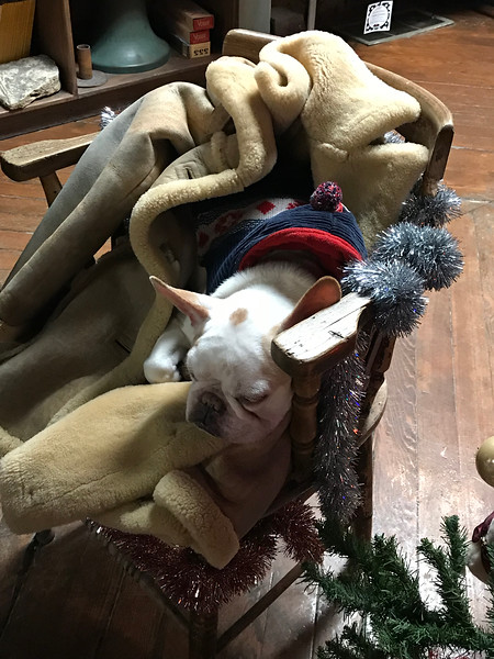 Dog in gift shop wearing a sweater and sleeping on a coat.