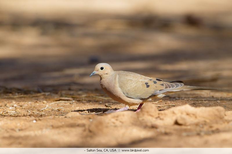 - Salton Sea, CA, USA