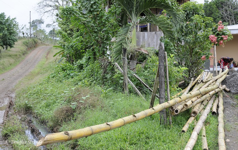 Maleku Village: Bamboo for construction