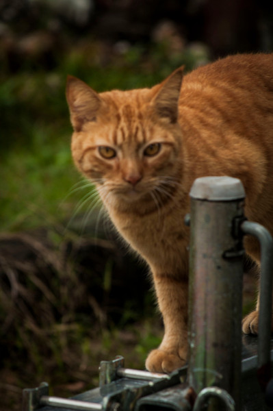 0 0 yyyymmdd (date)kitty 2.jpg