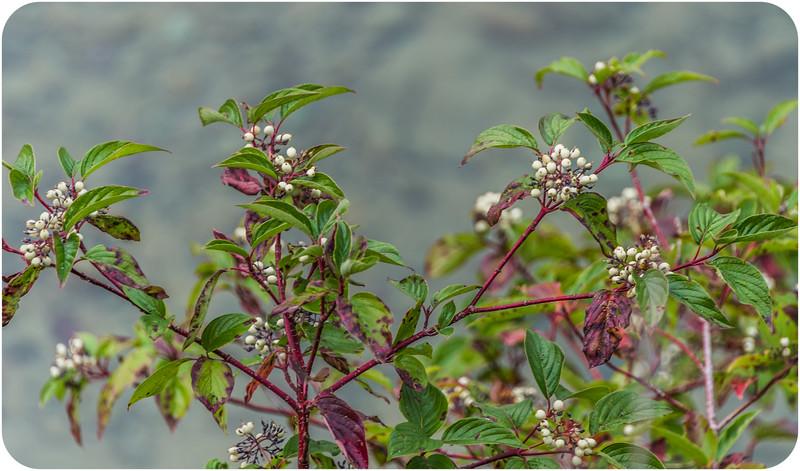 Montana Flora