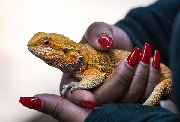 San Francisco Reptile Expo