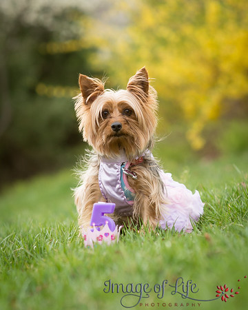 CTC Dogs Spring Portraits 2019