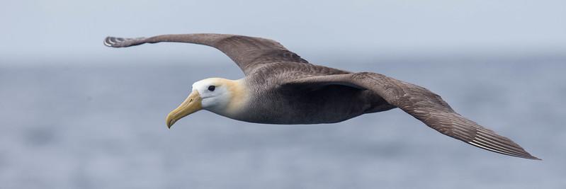Galapagos Seabirds 2017