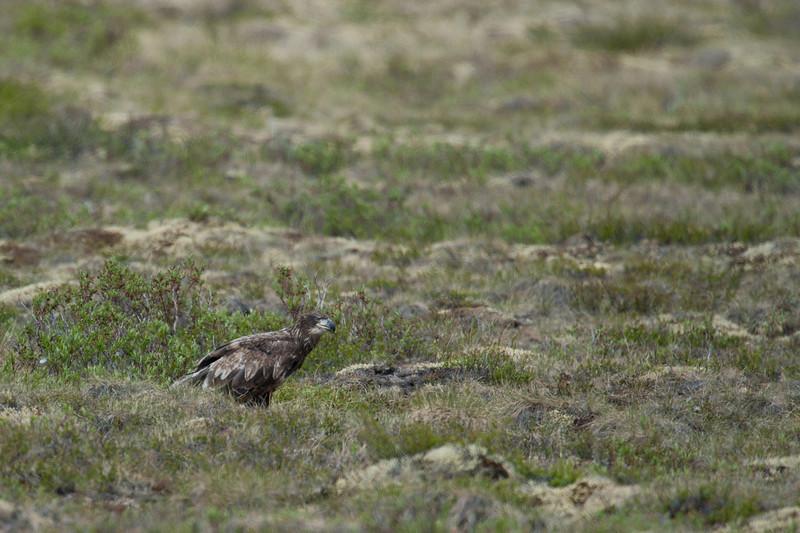 Wild birds in Dempster Highway in Yukon, Canada