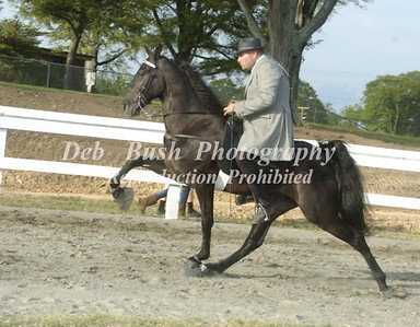 CLASS 12  - 3 YR OLD  OPEN