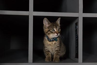 Kitten Yoga at Sutra Studio