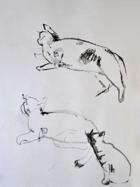 heyethree-cats.jpg