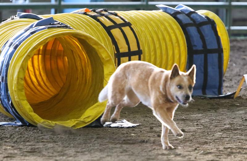 3-10-2019 Bloodhound-9123.jpg