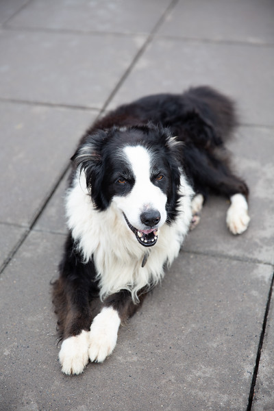 DogsAid-15.jpg