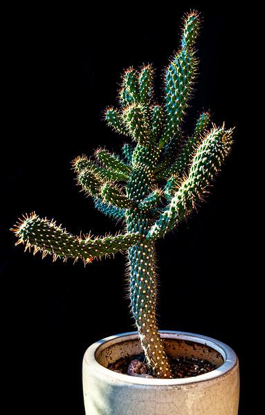 Cactus 091519-0171.jpg