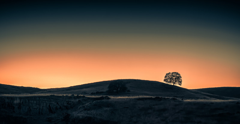 Oak-Tree-Merced-Foothills-Edit.jpg