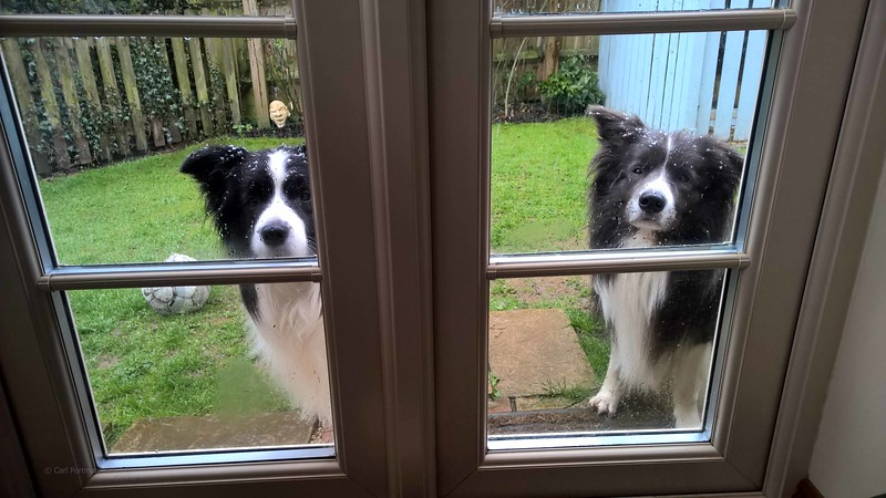 Can we come in dad.jpg