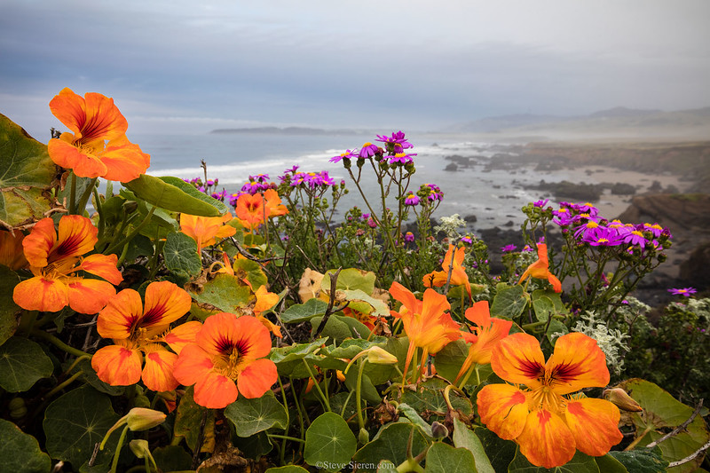 San_Simeon_Wildflowers_Coastal_California_T6A0072.jpg