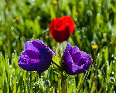 Israel's Spring Landscape