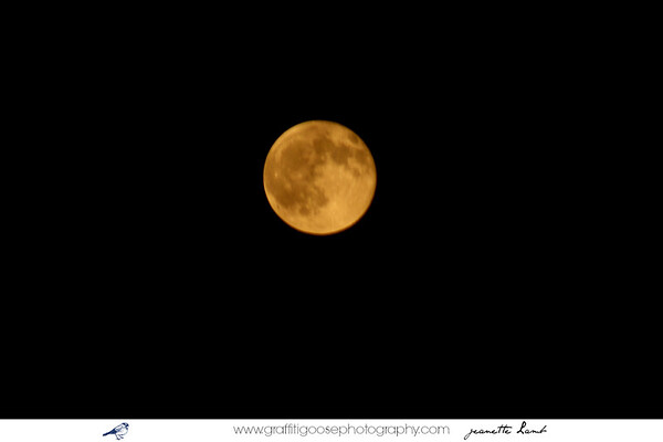 Full Moon ~ Summer ~ 2011