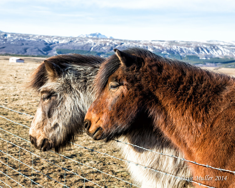 Iceland in Winter MKIII-20140223-0092-Edit.jpg
