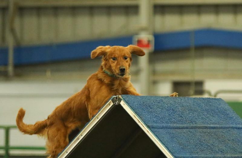 3-14-2016 Bloodhound-7131.jpg