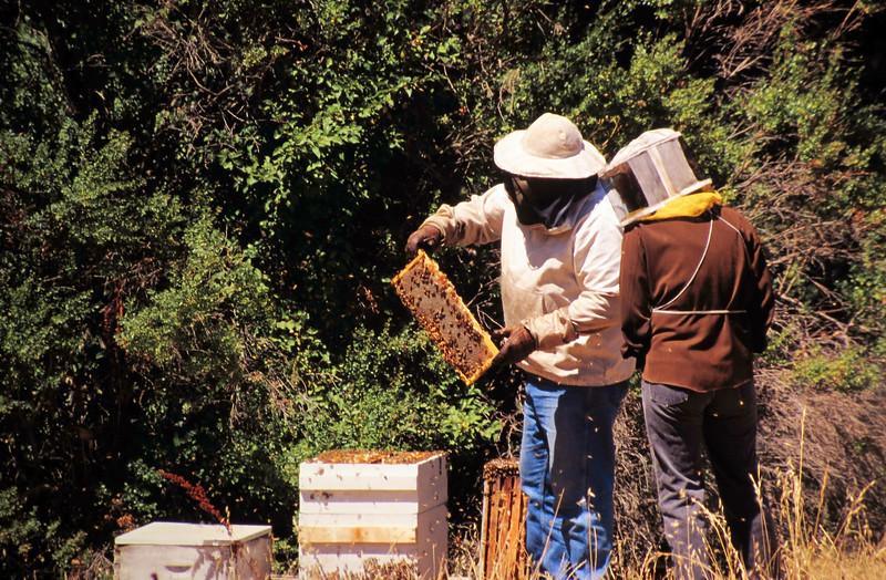 1995-06 Steve's Bees-2.jpg