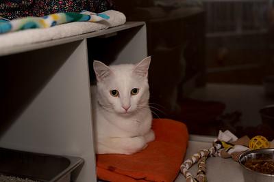 animals 10-5-2016 cats