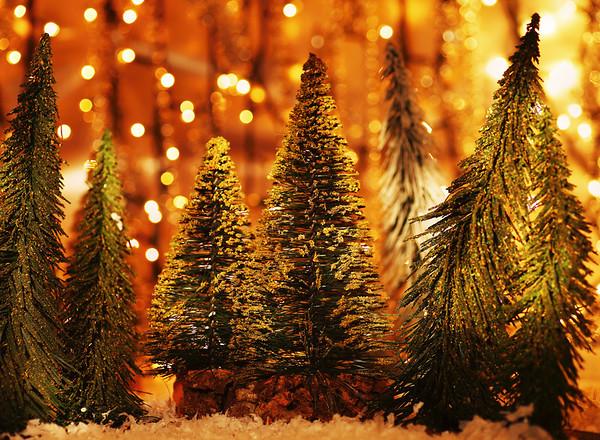 STK-christmastreeforest-L.jpg