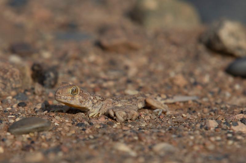 Namibia 69A4821.jpg