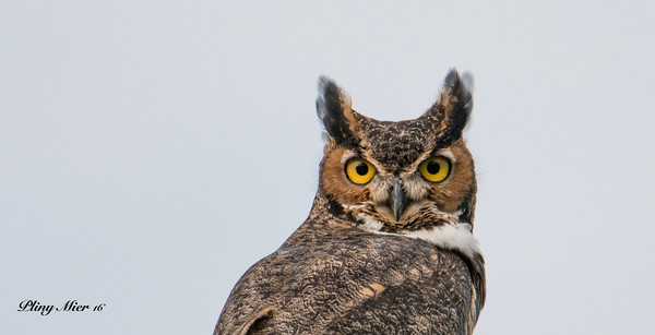 Owl Head_DWL0420.jpg