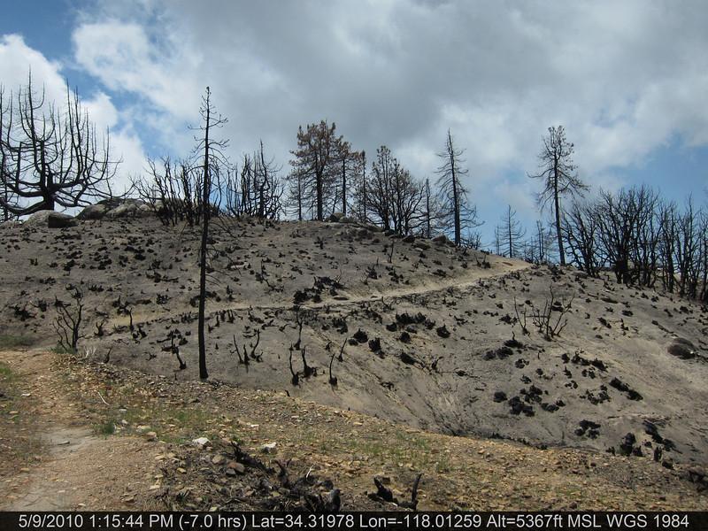 20100509125-Trail Recon, Silver Moccasin-East of Chilao.JPG