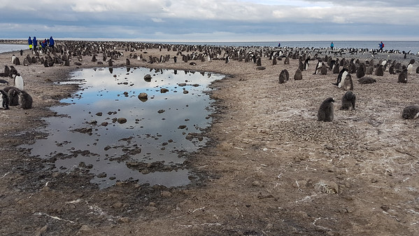 Franklin Island Antarctica