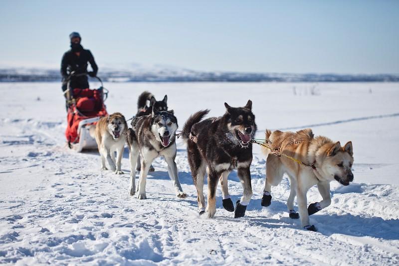 Husky sled in Alaska