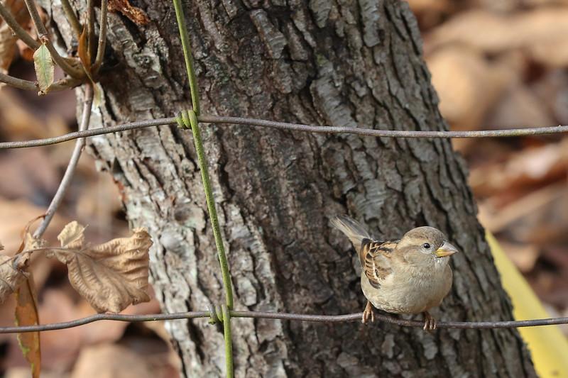 birds-108.jpg
