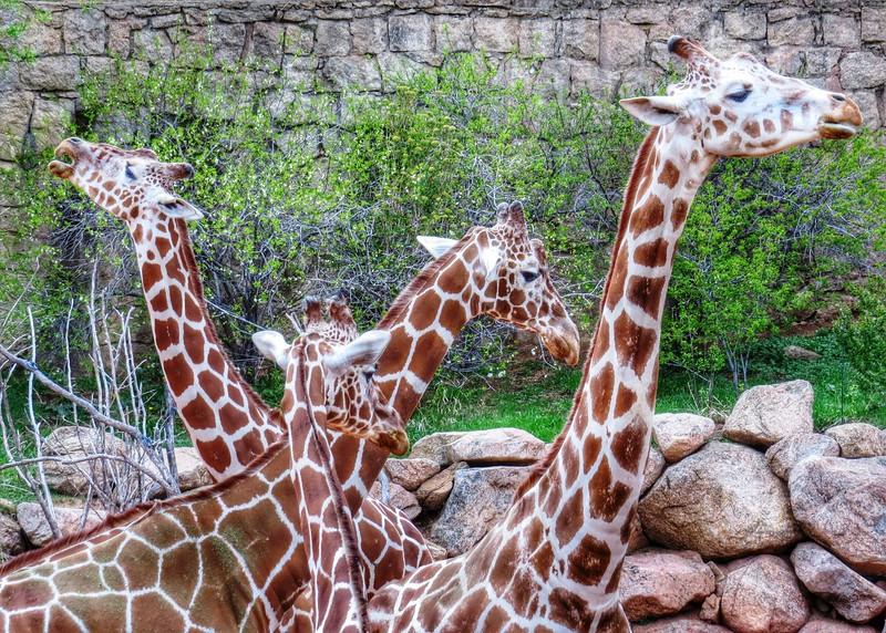 Cheyenne Mtn Zoo (127).jpg