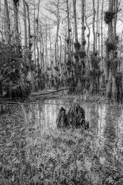 Everglades 2020-2.jpg