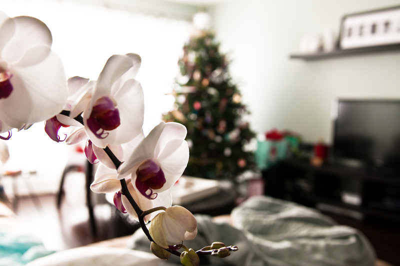 Christmas 2012-0086.jpg