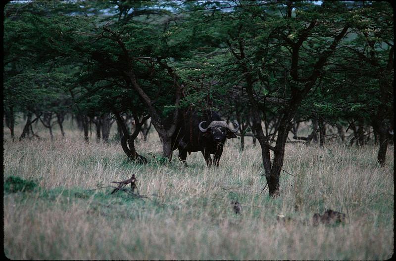 Kenya2_006.jpg