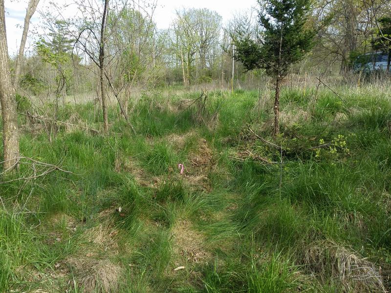 Tree Planting seq_006_20160417170617.jpg
