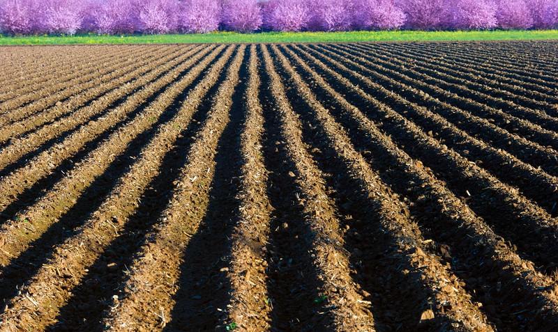 Farming-1.jpg