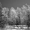 Near Minto AK 2002