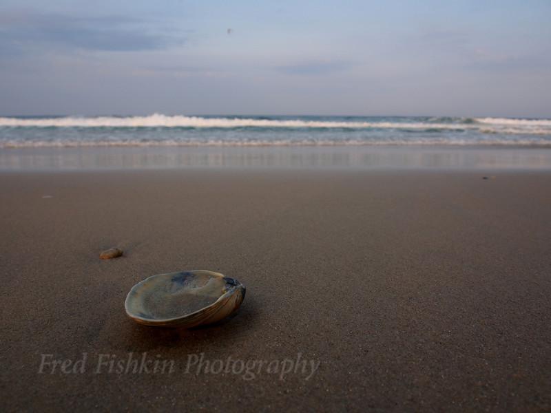 beach shell.jpg