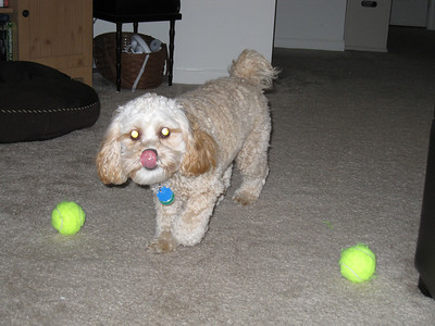 Olive vs. tennis ball(s) - November 2009