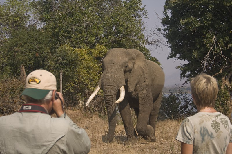 WST-EST ELEPHANT ON LAND CLOSEZIMBABWEWST-EST ELEPHANT ON LAND CLOSE.jpg