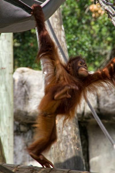 R_Tampa_Zoo-325-Edit.jpg