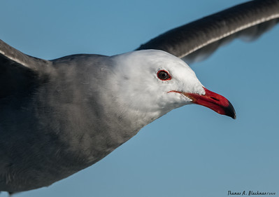 Pelagic Birding 2020