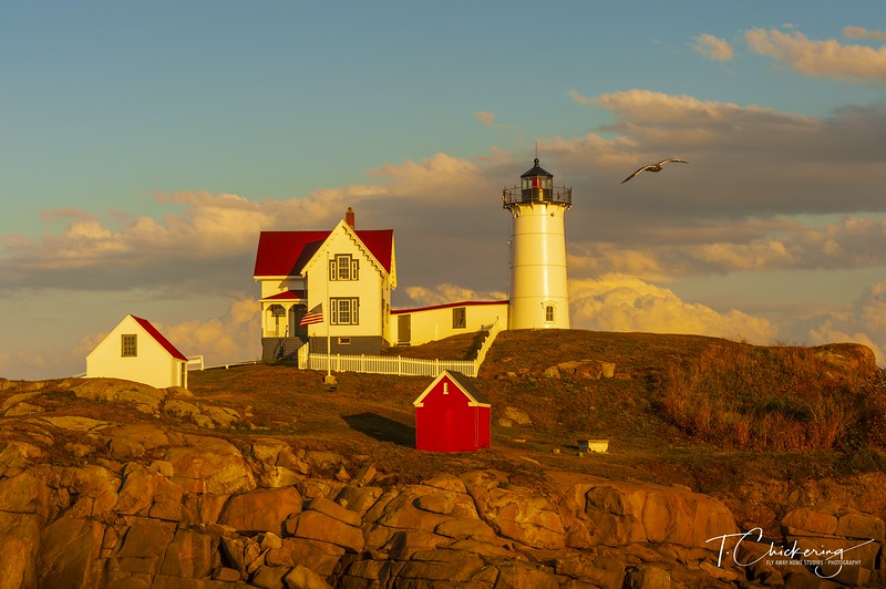 Nubble Lighthouse with Seagull.jpg