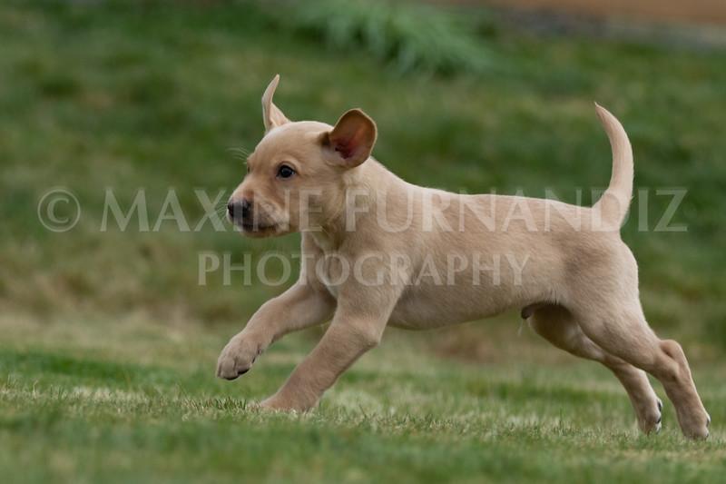 Weika Puppies 24 March 2019-6629.jpg