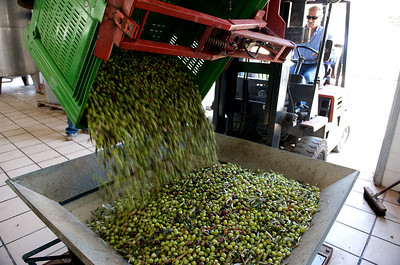 The Making of Sicilian Olive Oil, October 2008.