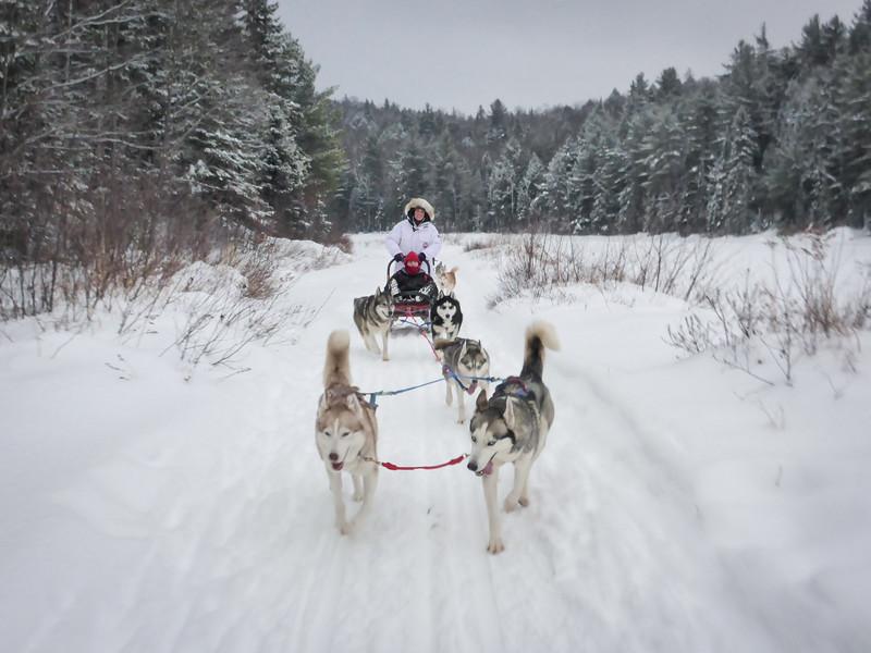 dogsledding-ontario-winterdance-2.jpg