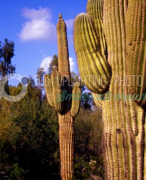 Cactus-03_batch_batch.jpg