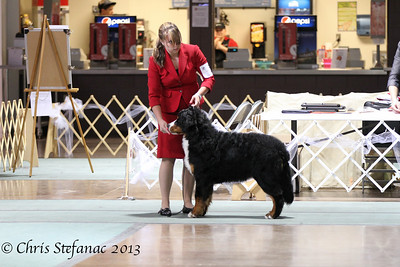 6-9 Puppy Dog BMDCA 2013