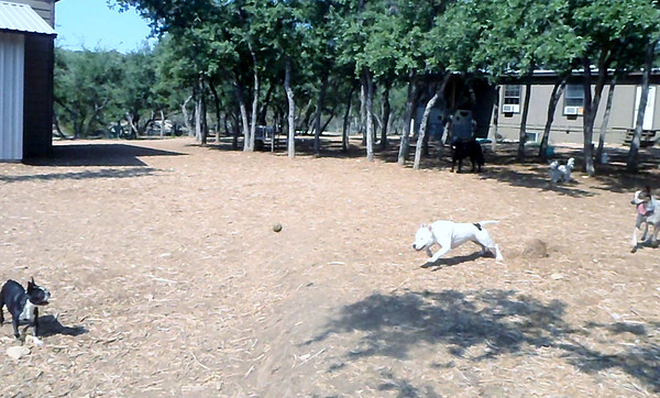 August 2012 A to Z Dog Ranch